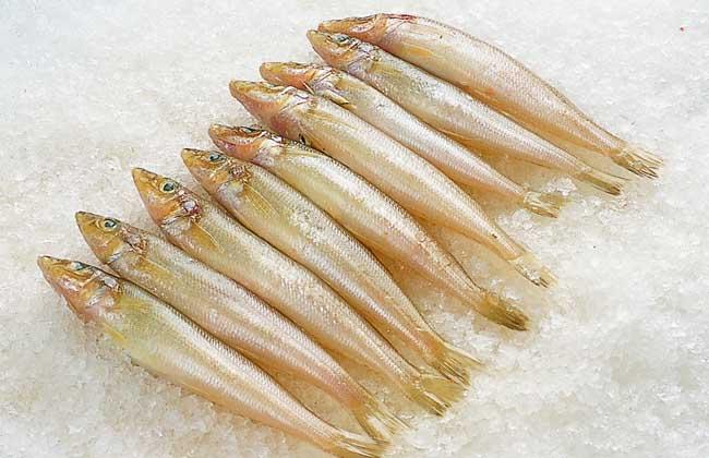 沙丁鱼的营养价值