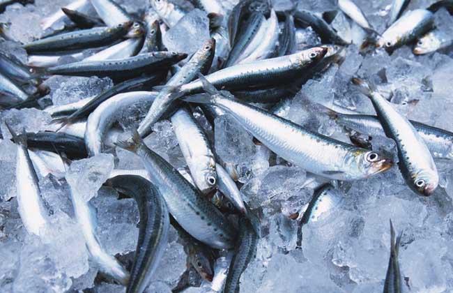 沙丁鱼的做法