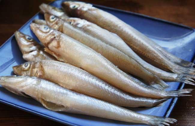 沙丁鱼是什么鱼