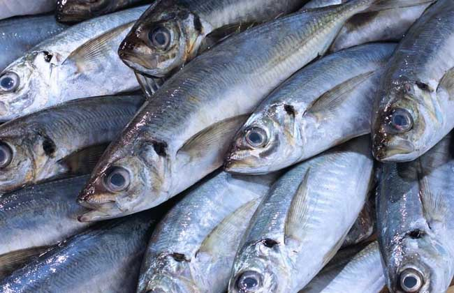沙丁鱼价格多少钱
