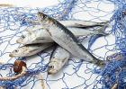 沙丁鱼效应是什么意思?