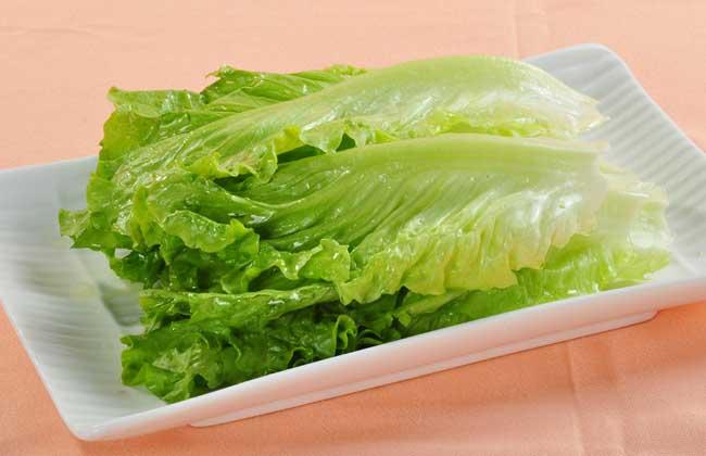 生菜的种植技术