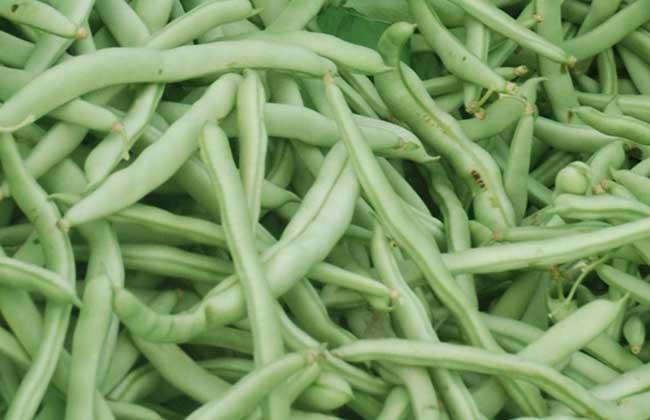 四季豆的做法大全