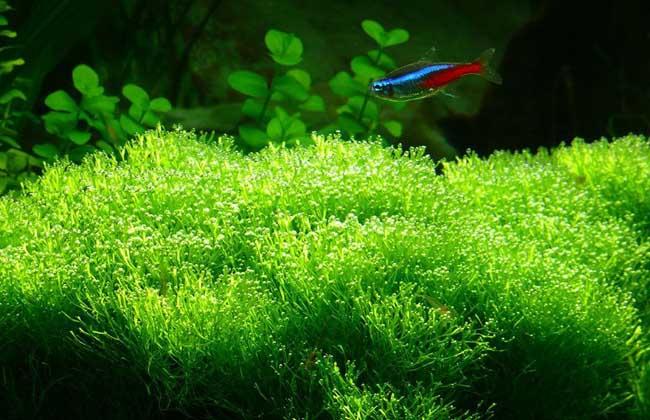 水草种类图片大全