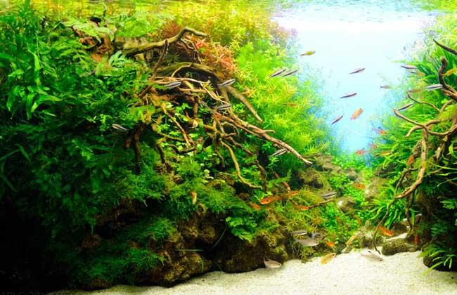 水草缸造景教程