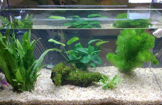 鱼缸中养水草的作用