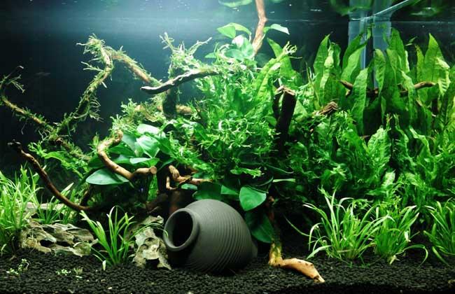 鱼缸水草造景视频教程