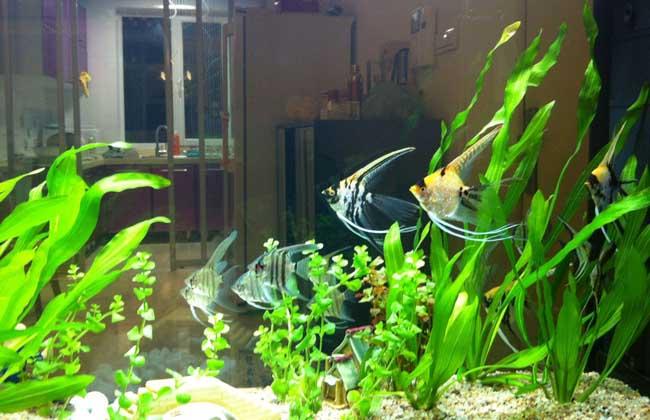 鱼缸水草造景