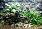 水草能产生氧气吗?