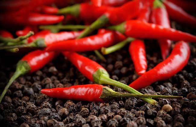辣椒种类图片