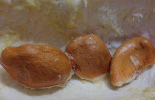 榴莲核能不能吃