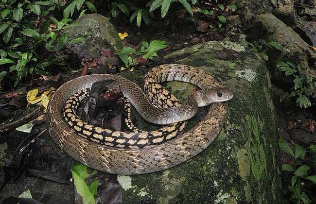 乌梢蛇的做法大全