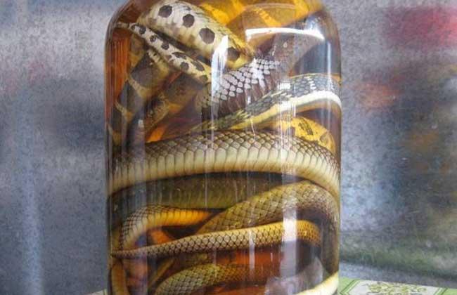 红花乌梢蛇酒