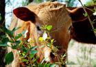 牛能活多少年?