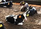 牛前胃弛缓防治方法