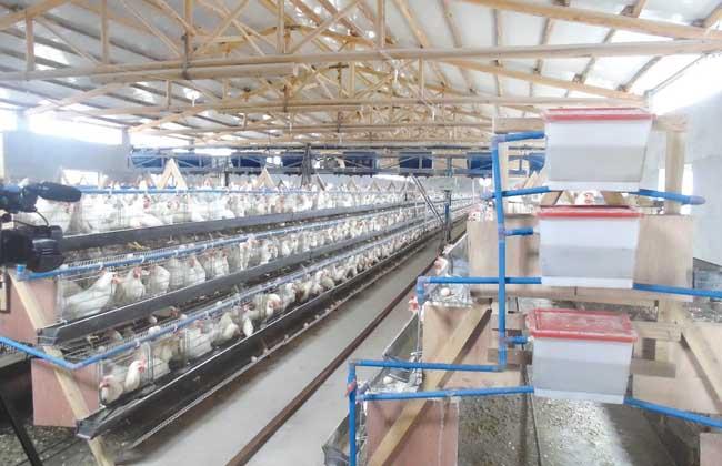 现代化养鸡场