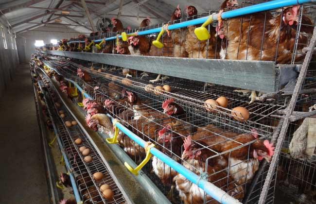 养鸡场消毒