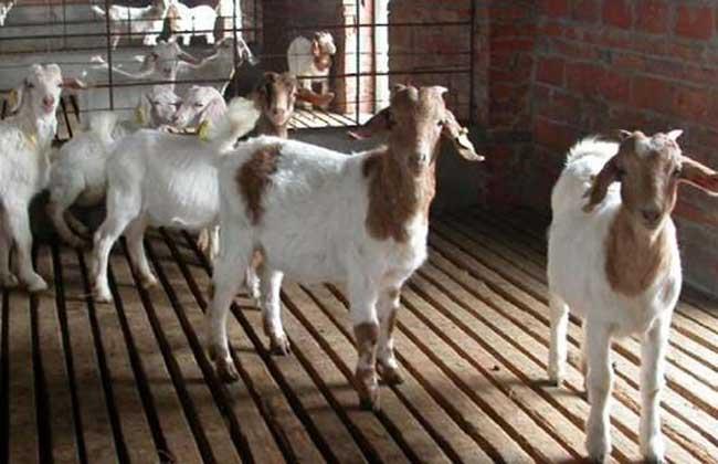养羊场设备管理制度