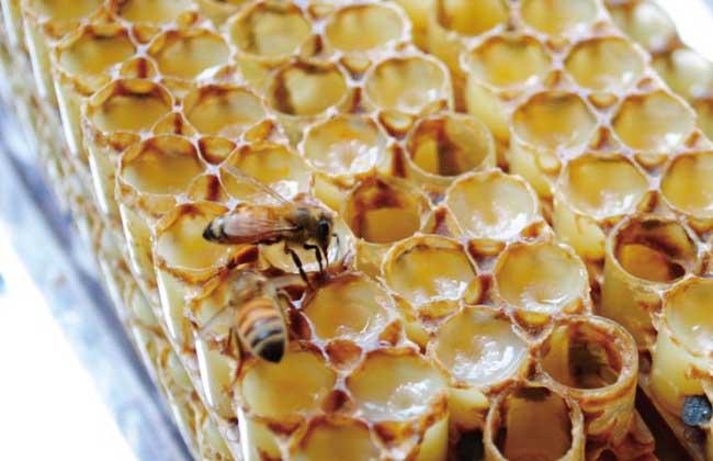蜂王浆多少钱一斤