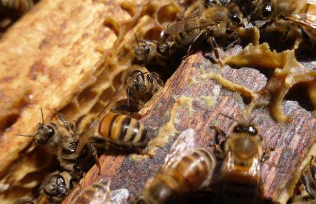 2017年蜜蜂养殖成本和利润