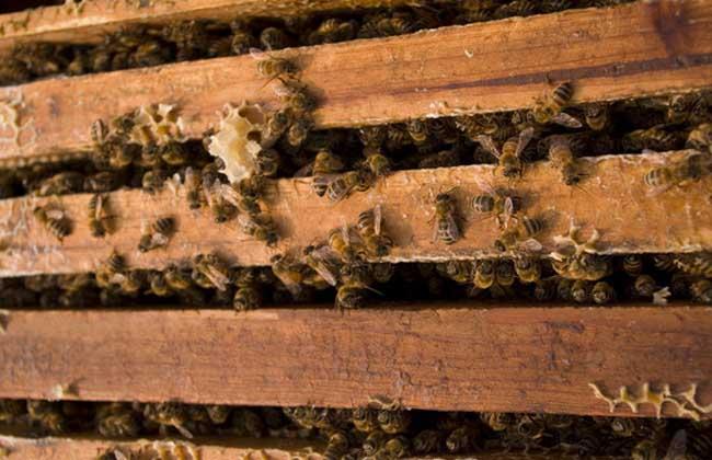 蜜蜂养殖成本和利润