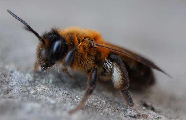 蜜蜂夏季管理技术视频