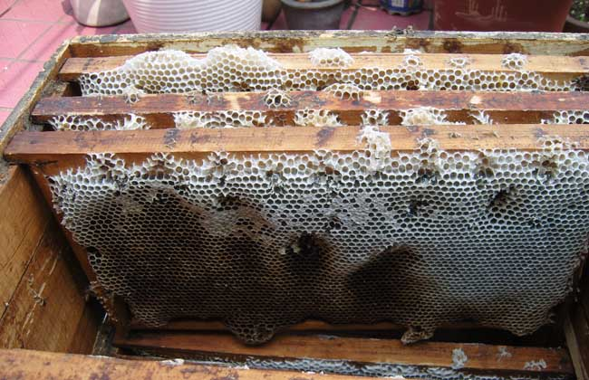 蜜蜂巢脾修造方法
