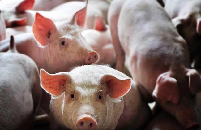 生态养猪场建设