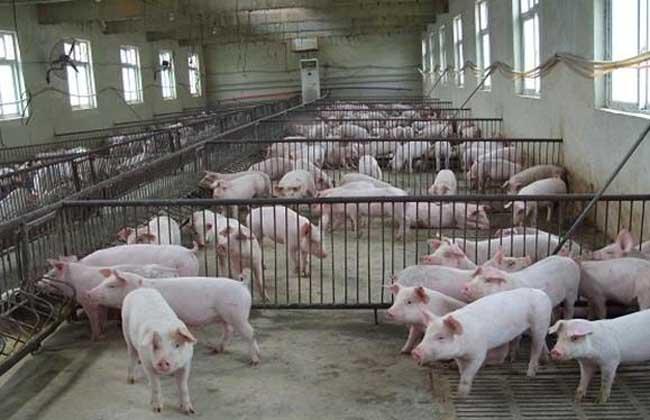标准化养猪场建设