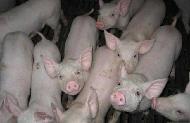 仔猪腹泻的防治方法