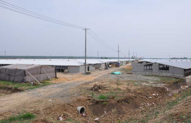 肉鸭养殖大棚建设