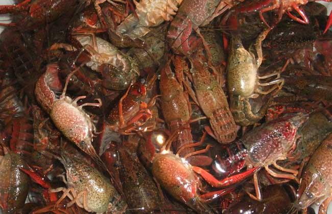 小龙虾多少钱一斤?