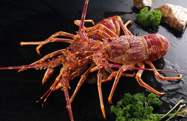 澳洲龙虾多少钱一斤?