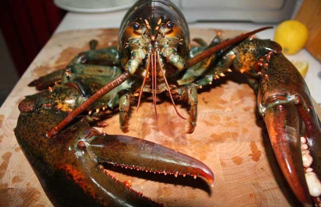 大龙虾多少钱一斤?