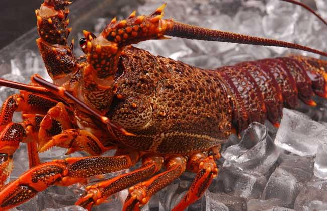 大龙虾多少钱一斤