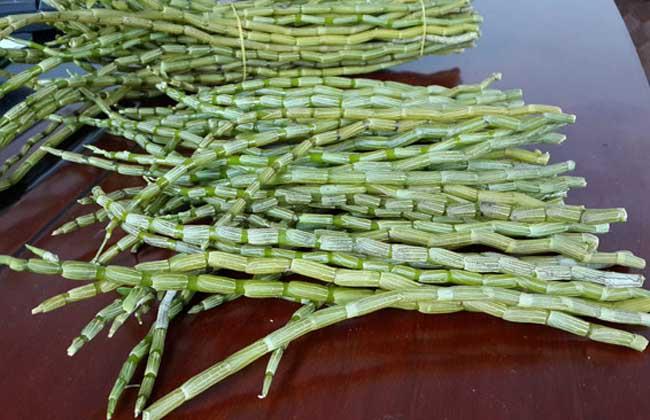 铁皮石斛能生吃吗