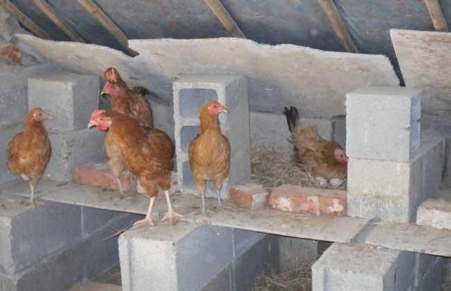 养鸡场鸡舍建设方案