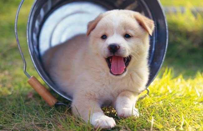 狗狗的生活习性