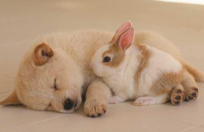 """狗狗起名常见方法 1、根据外形取名:根据狗狗的外形取名,应该是最常见的狗狗取名法。比方说,毛色黑的就叫""""黑子"""",毛色黄的就叫""""黄黄"""",杂色的狗狗就叫""""花花""""等。 2、根据性格取名:有狗狗特别活泼,有的狗狗非常温驯,有的狗狗则比较沉默,也就因此被赋予""""淘淘""""、""""乖乖""""、""""默默""""等。 3、恶搞好玩取名:有的狗狗名字,一看就知道是被主人恶搞了。比方说什么"""""""