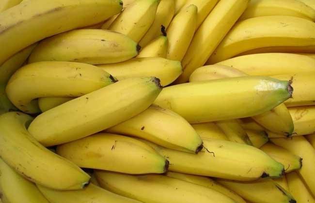 吃香蕉会不会长胖?