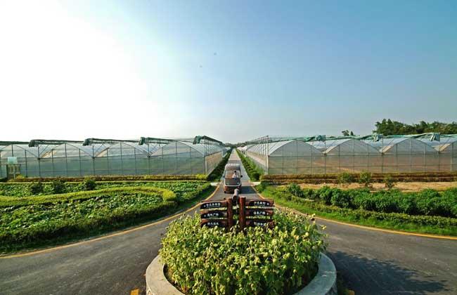 生态农业的发展前景