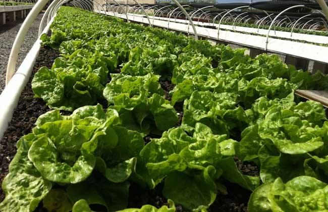 生态农业发展前景