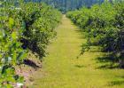休闲农业的发展趋势
