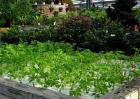 生态农业观光园设计原则