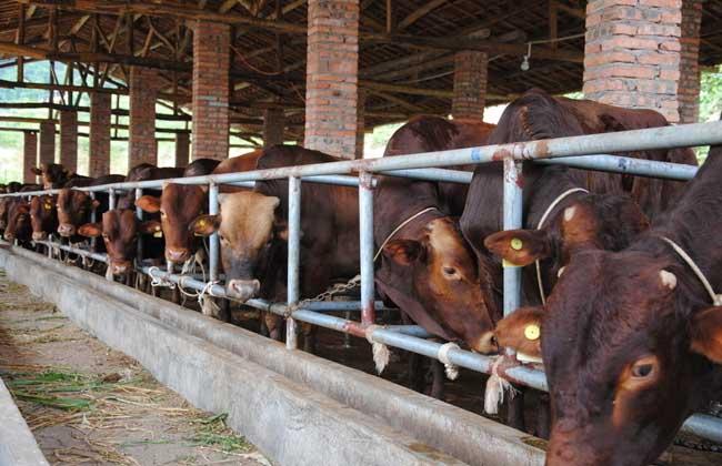 农村养牛有补贴吗