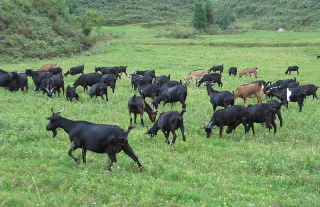 养羊有补贴吗