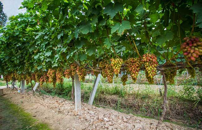 2016年农业合作社补贴和优惠政策