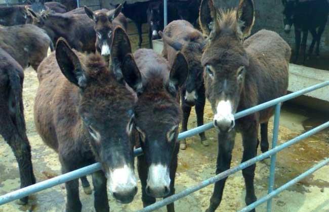 肉驴养殖补贴