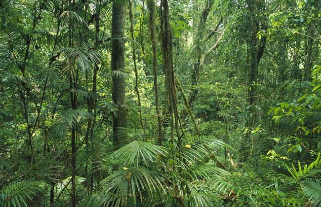 热带雨林迁移农业