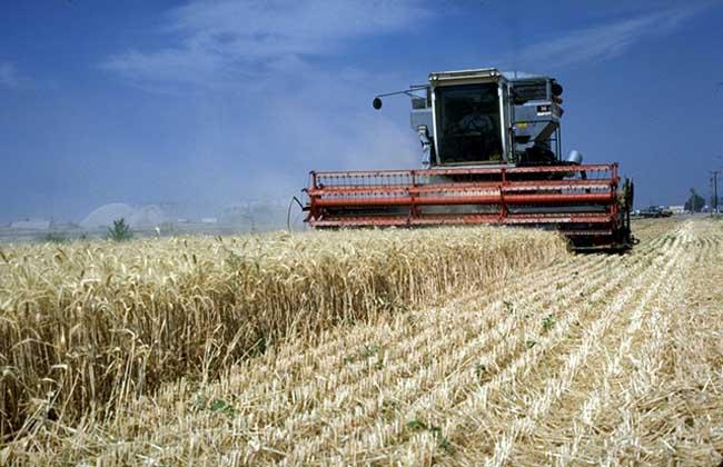 商品谷物农业